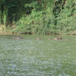 hippo sanctuary